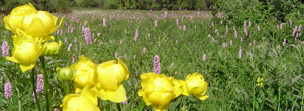 Discover the flowers in theyr Natual Habitats